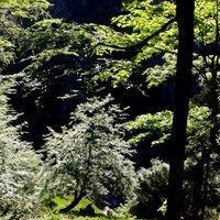 Profilbild von blaetterwald
