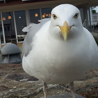 Profilbild von Regina81