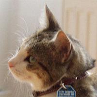 Profilbild von pamina